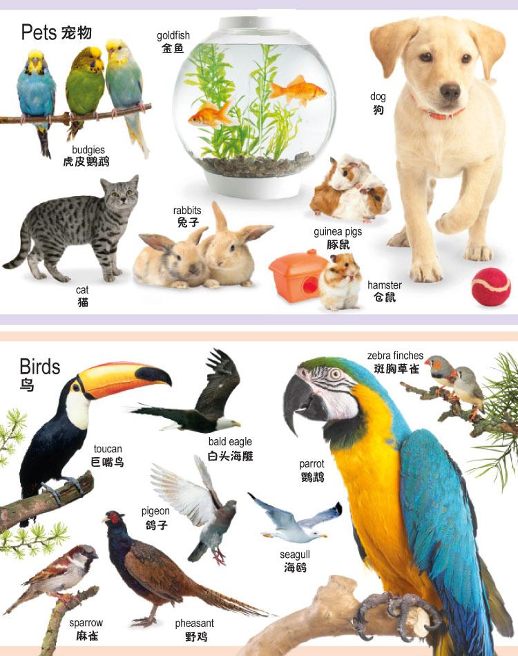 国开童媒 幼儿认知百科全书:动物【价格 特卖 图片100